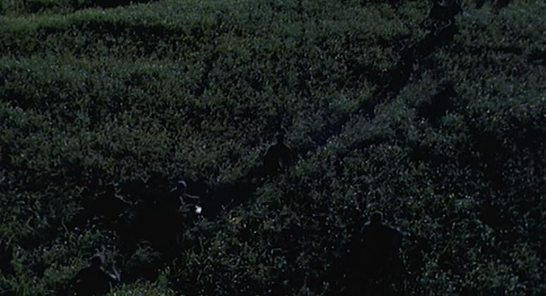 My Favorite Scene: The Lost World – Jurassic Park (1997
