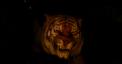 Shere Kahn, Idris Elba, Disney's The Jungle Book
